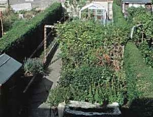A photo of a hugely overgrown garden, the path and shed are visible on the left, the rest is a mass of overgrown shrubbery.